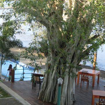 Lake Wind Hotel Tissamaharama
