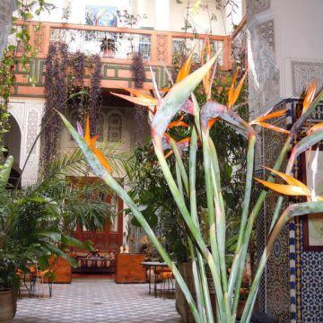 Hotel Riad Al Bartal