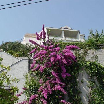 Villa Maslina/Duce Omis