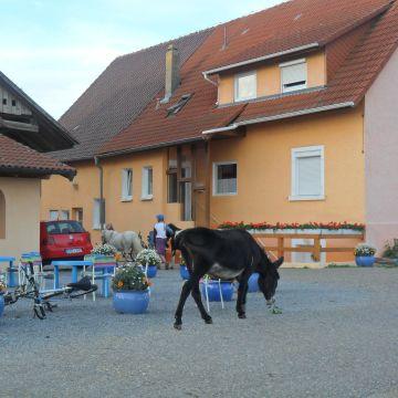 Wüsthäuser Hof