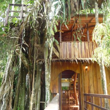 Topos Tree House