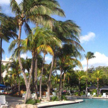 Hilton Aruba Caribbean Hotel & Casino