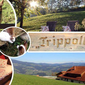Ferienwohnungen Trippolthof - Urlaub am Bauernhof