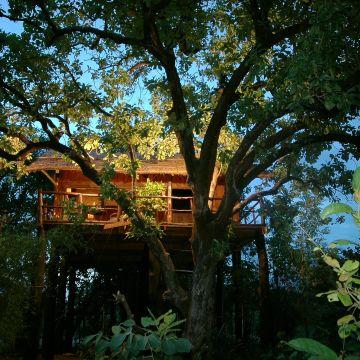 Tree House Hideaway - Bandhavgarh