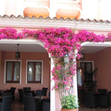 Hotel Cala Club Ginepro