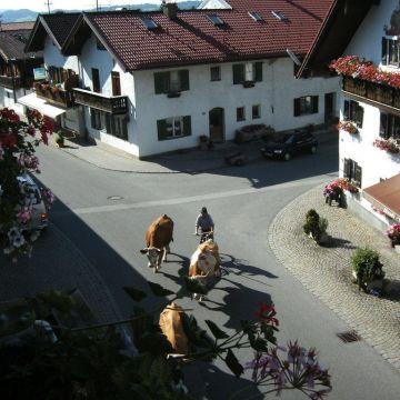 Bauernhof Zum Mesmer - Familie Benedikt