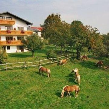 Bauernhof Wolf