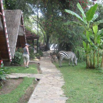 Hotel Mara Buffalo Camp