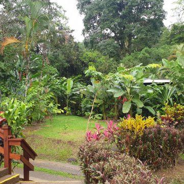 Hotel Chachagua Rainforest