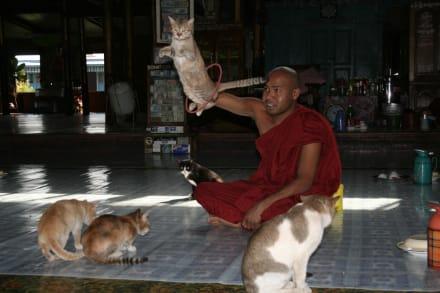 Tempel der springenden Katzen - Tempel der springenden Katzen