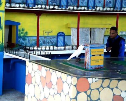 Manati Park, Papagaien Show - Manati Park Bavaro