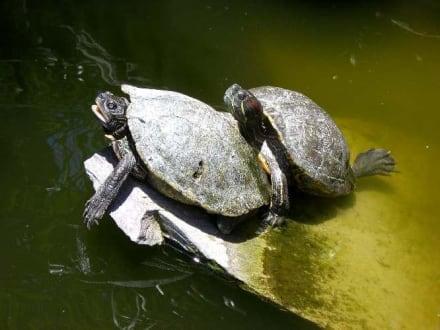 Schildkröten - Palmitos Park