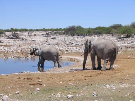 Elefanten am Wasserloch - Etosha Nationalpark
