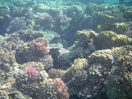 Unterwasser - Schnorcheln Marsa Alam