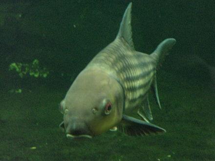 Berliner Zoo, Aquarium - Aquarium (Zoologischer Garten)
