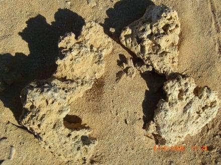 Abgestorbene Koralle  - Giftun / Mahmya Inseln