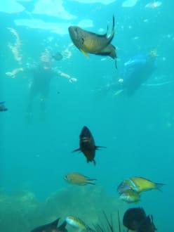 Schnorcheln gehen mit Watersports Fuerteventura - Schnorcheln (Watersports Fuerteventura)