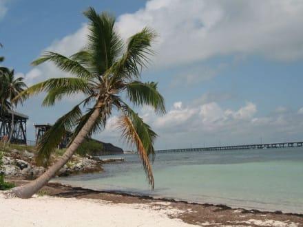 Palme - Bahia Honda Key State Park