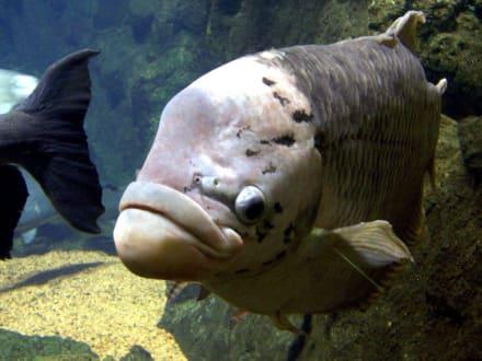 Im Aquarium - Loro Parque