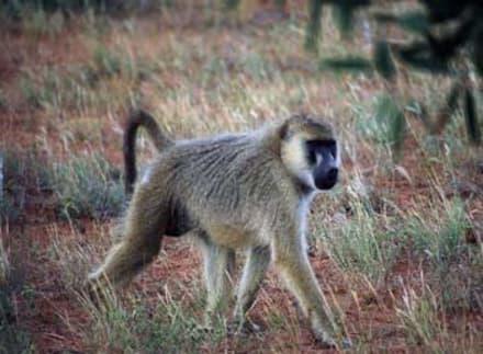 Tsavo ost - Tsavo Ost Nationalpark