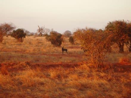 Safari Tsavo Ost - Tsavo Ost Nationalpark