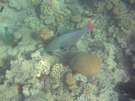 Fische am Riff - Ausflug mit Mohamed