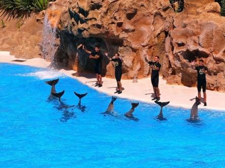 Loro - Park Delfin-Show - Loro Parque