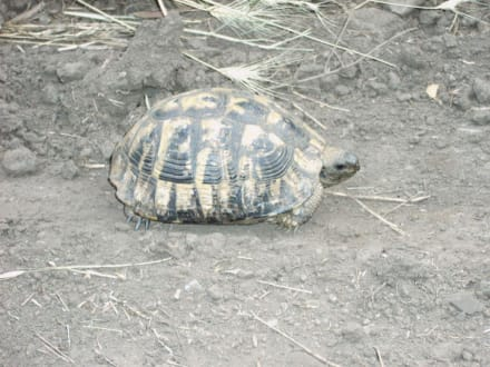 Schildkröten auf der Wanderung - Wandern Metamorphosis