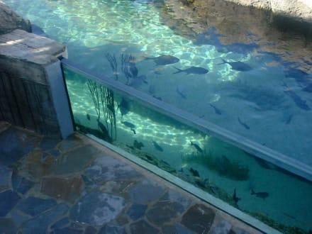 eines der Schaufenster im Riesenaquarium - Ocean World