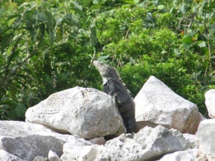 Ein Spaziergang auf dem Ruinen Gelände - Ruinen von Tulum