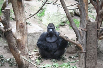 im Zoo - Zoo Leipzig