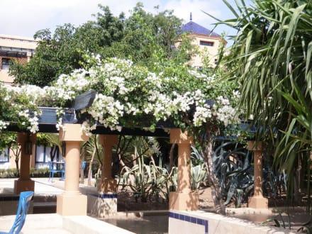 Jardin - Hotel Riu Tikida Garden