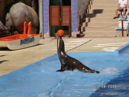 Seehundshow - Marineland