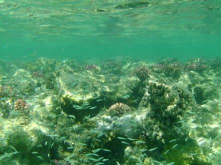 Unterwasser - Tauchen El Quseir