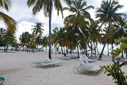 Bacardi Insel Dom Rep Karte.Bilder Bacardi Insel Samána Dominikanische Republik Reisetipps