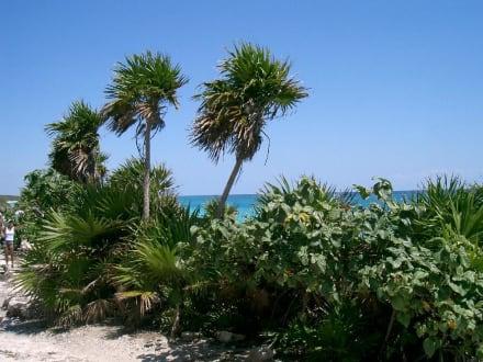 Bei den Maya - Ausgrabungsstätten von Tulum - Strand Tulum