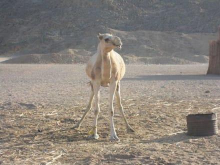 Ausflug in die Wüste - Wüste