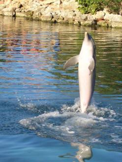 Delphinshow - Delfinarium Puerto Aventuras