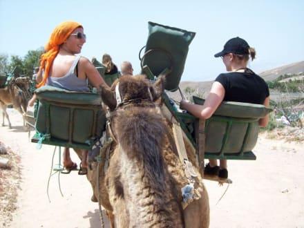 Kamelreiten - Oasis Park