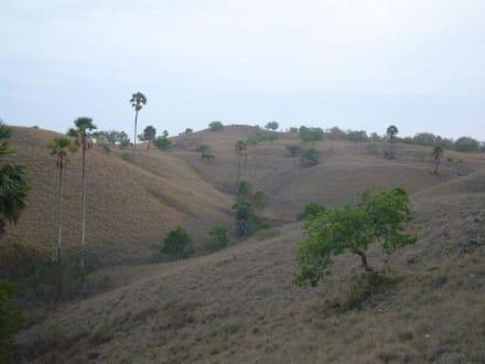 Landschaft auf Rinca - Nationalpark Komodo