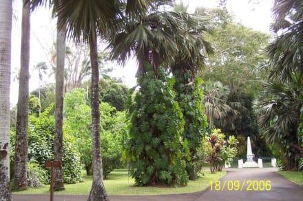 Gartenanlage - Sir Seewoosagur Ramgoolam Botanical Garden / Pamplemousses Botanical Garden