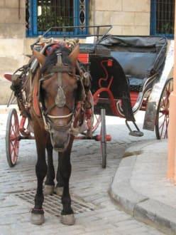 Pferdekutsche in Havanna - Altstadt Havanna
