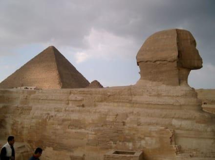 Pyramiden von Gizeh und Sphinx - Sphinx von Gizeh