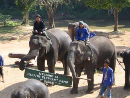 Die Elefanten heißen einen hier auch willkommen. - Maeping Elephant Camp