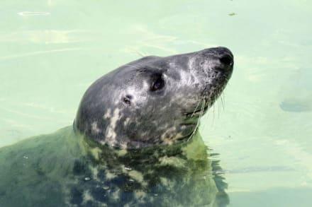 noch eine Seehund - Ecomare