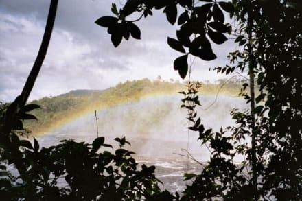 Regenbogen beim Salto Sapo - Wasserfälle von Canaima - Salto Sapo
