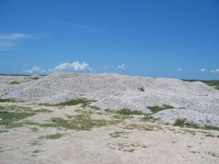 Muschelfriedhof - Muschelfriedhof Isla de Coche