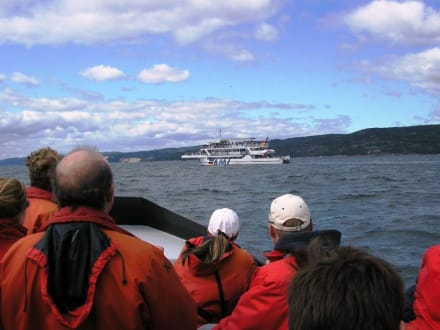 Walbeobachtung am St.Lorenz-Strom - Whale Watching Tadoussac