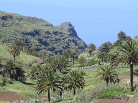 Palmenlandschaft - Landschaft bei El Cercado