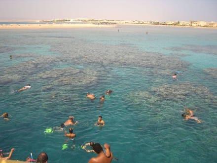 Schnorcheln im Roten Meer - Tobia Island